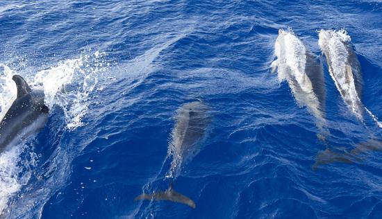 03 - Les dauphins