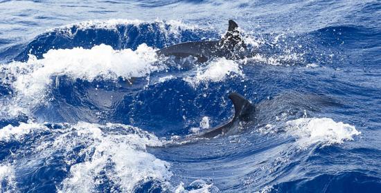 04 - Les dauphins