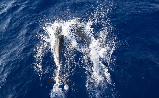 05 - Les dauphins