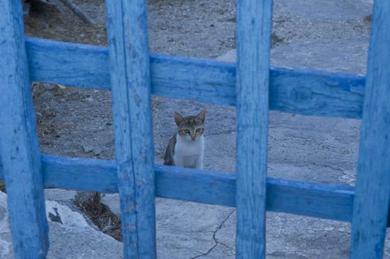 07 - Les chats