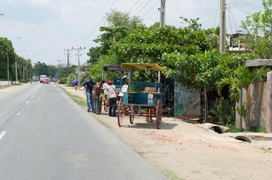 Les charettes que nous verrons partout à Cuba