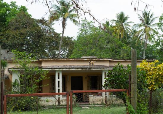 Spécilaité cubaine : un chien sur un toit