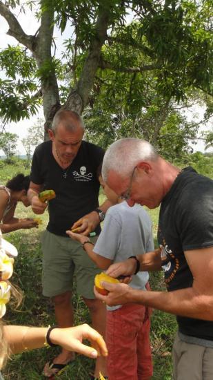 Pause déjeuner : mangues, ananas et bananes bio. Un vrai régal